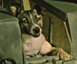 Space Dog Laika Launched to her Death