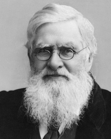 Naturalist, biologist, and explorer Alfred Russel Wallace