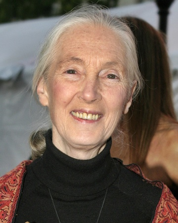 Primatologist and Anthropologist Jane Goodall