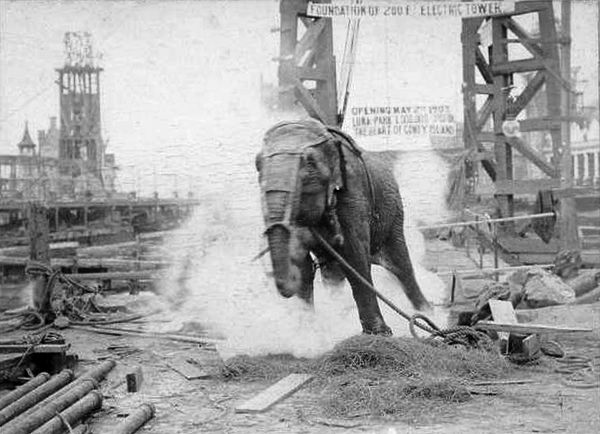 Topsy the elephant is electrocuted to death at Luna Park in New York