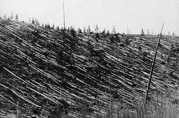 Downed Trees as a result of the Tunguska explosion in Russia in 1908